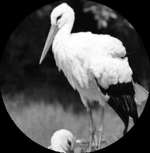 Donate Stork