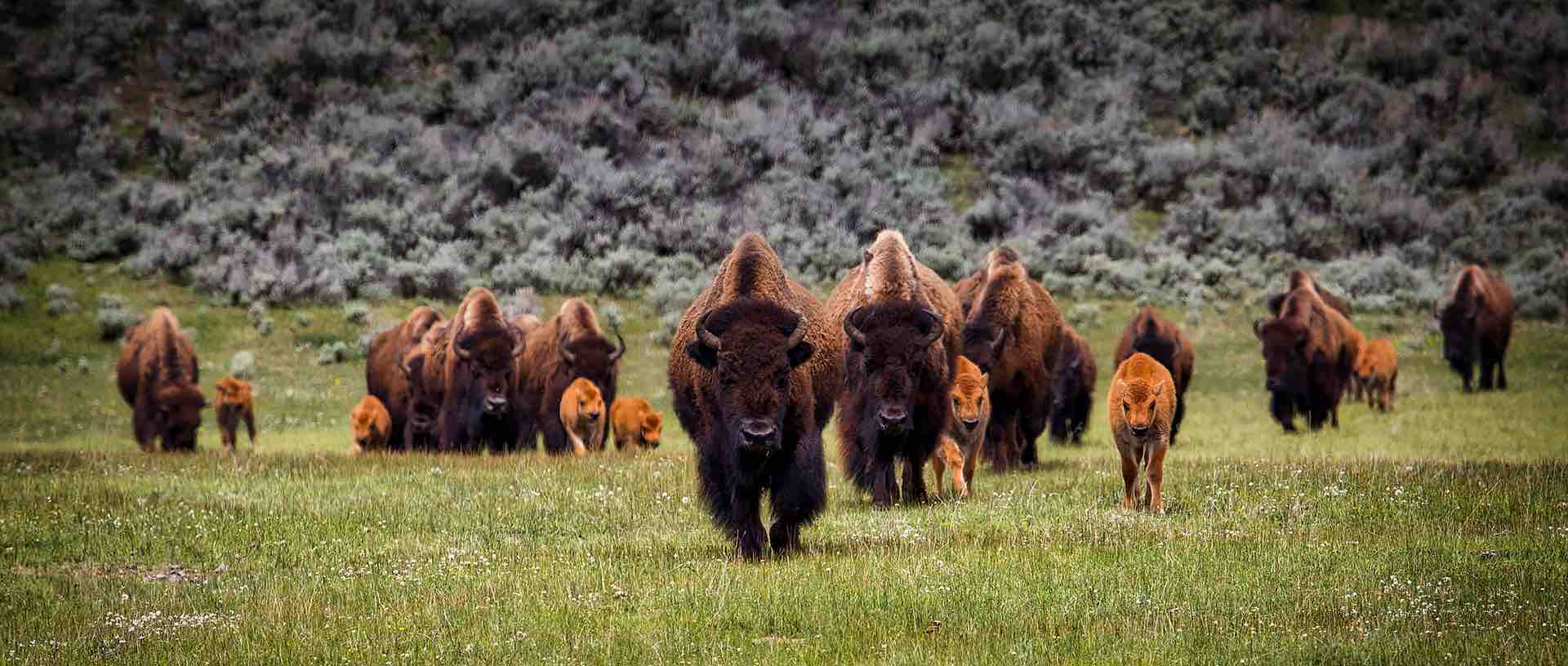 Our mission Bison
